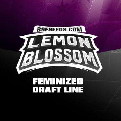Lemon-Blossom-femminisees