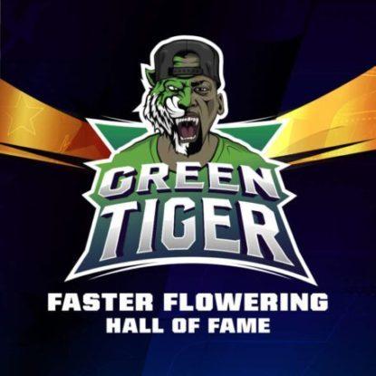 Proprieté du graines de cannabis à floraison rapide Green Tiger