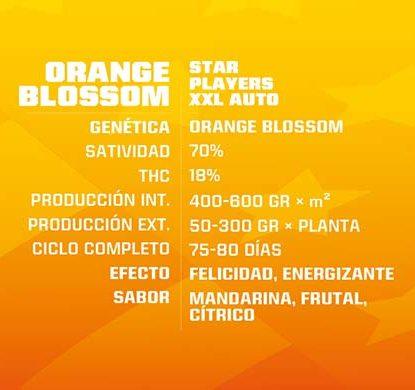 SensorySeeds Description Graines Orange Blossom Autofloraison