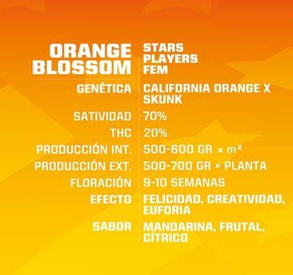 SensorySeeds Description Graines Orange Blossom Féminisées
