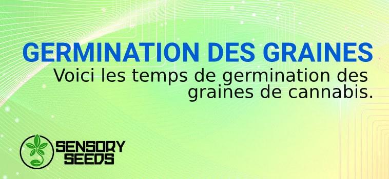 GERMINATION DES GRAINES de marijuana