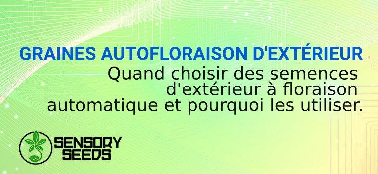GRAINES AUTOFLORAISON D'EXTÉRIEUR