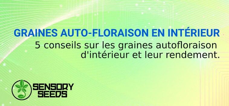 GRAINES AUTOFLORAISON EN INTÉRIEUR
