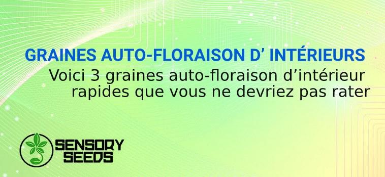 GRAINES AUTOFLORAISON INTÉRIEURS