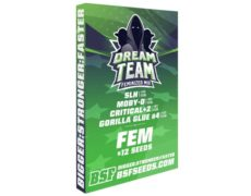 Kit Dream team Feminized Mix du weed seed shop
