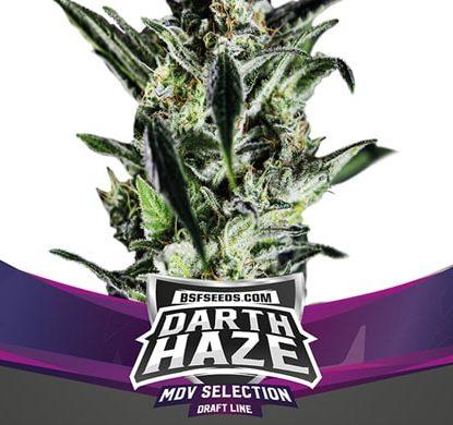 Plante de graines de cannabis féminisé du Darth Haze