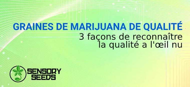 graines de cannabis de qualité