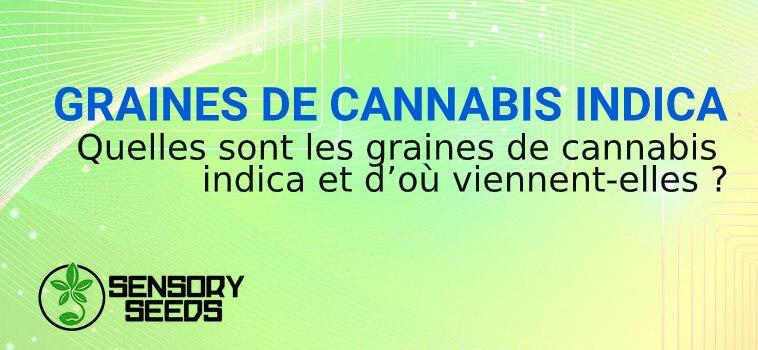 graines de marijuana indica