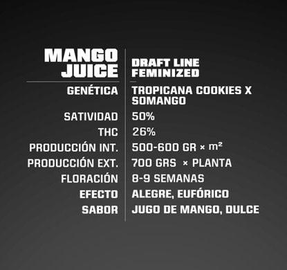 Description de graines de cannabis fèminisée Mango Juice