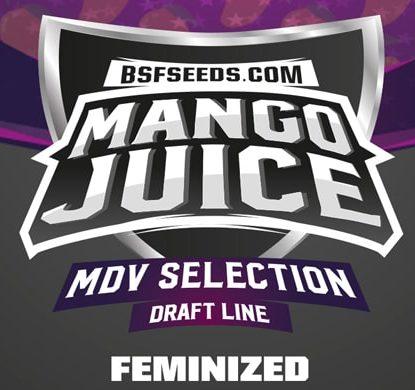 Label de graines de cannabis fèminisée Mango Juice