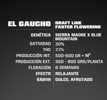 Proprieté du graines de cannabis à floraison rapide El Gaucho