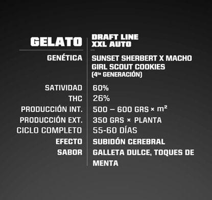 Proprieté du Gelato XXL du graine autofloraison