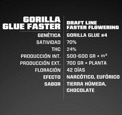 Proprieté du graines de cannabis à floraison rapide Gorilla Glue