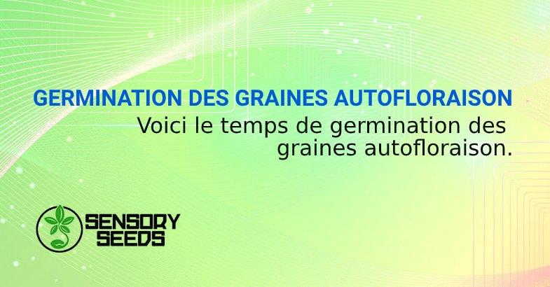 GERMINATION DES GRAINES AUTOFLORAISON