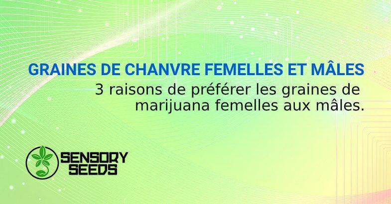 GRAINES DE CHANVRE FEMELLES ET MÂLES