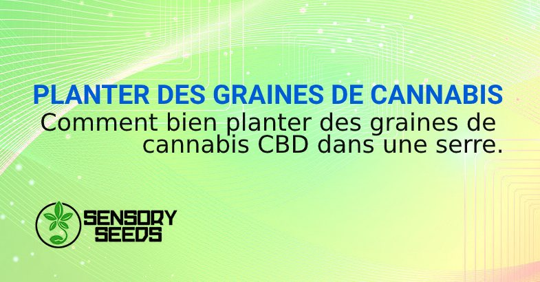 PLANTER DES GRAINES DE CANNABIS