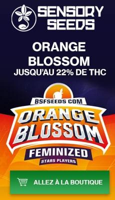 Banner Sensoryseeds Orane Blossom graines feminisees