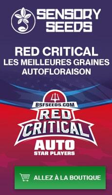 Banner Sensoryseeds Red Critical graines de cannabis autofloraison