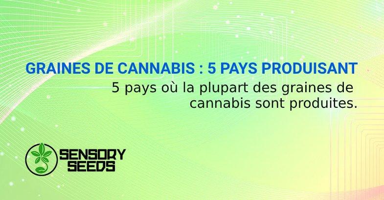 GRAINES DE CANNABIS PAYS PRODUISANT