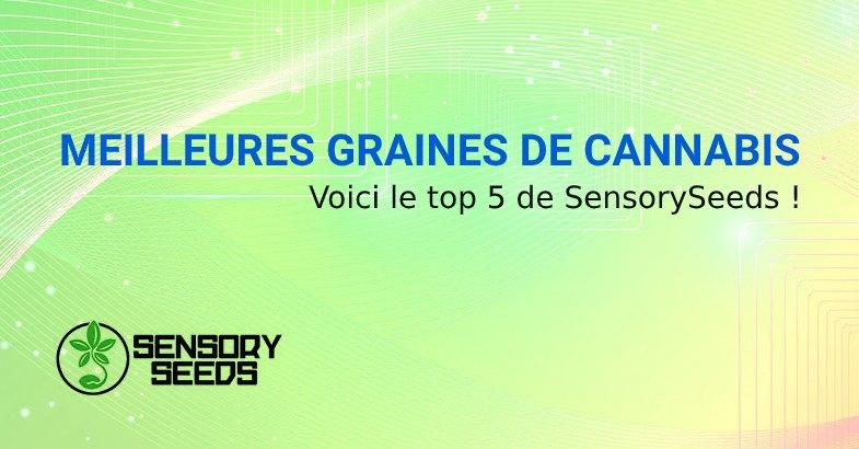 MEILLEURES GRAINES DE CANNABIS