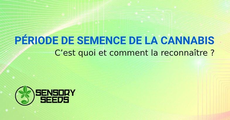PÉRIODE DE SEMENCE DE LES GRAINES DE CANNABIS
