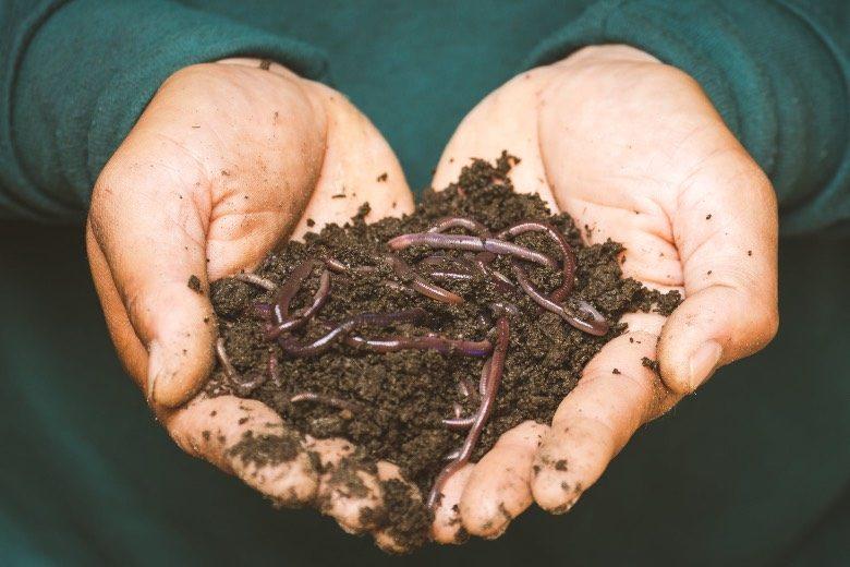 des engrais organiques pour les graines de marijuana