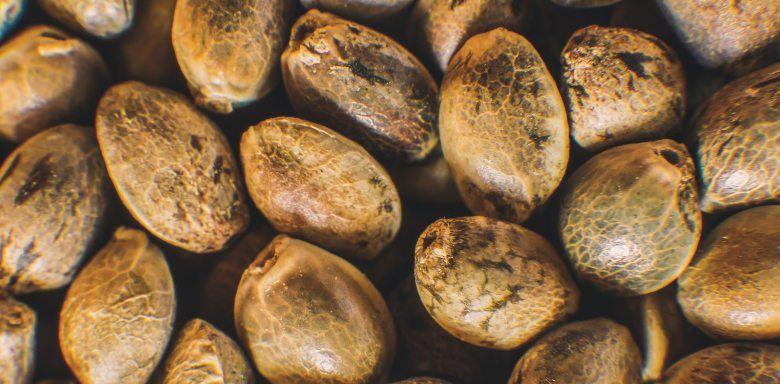 graines de canabis en ligne