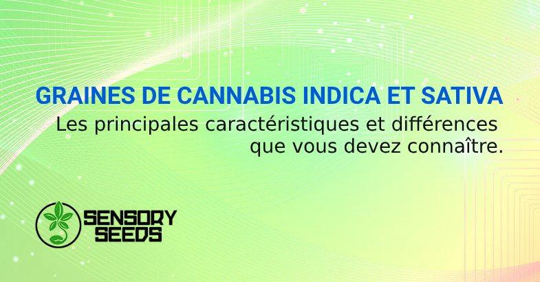 GRAINES DE CANNABIS INDICA ET SATIVA