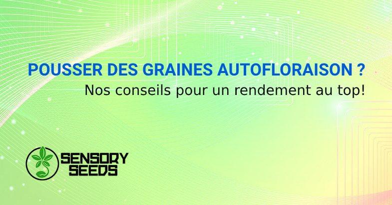 POUSSER DES GRAINES AUTOFLORAISON