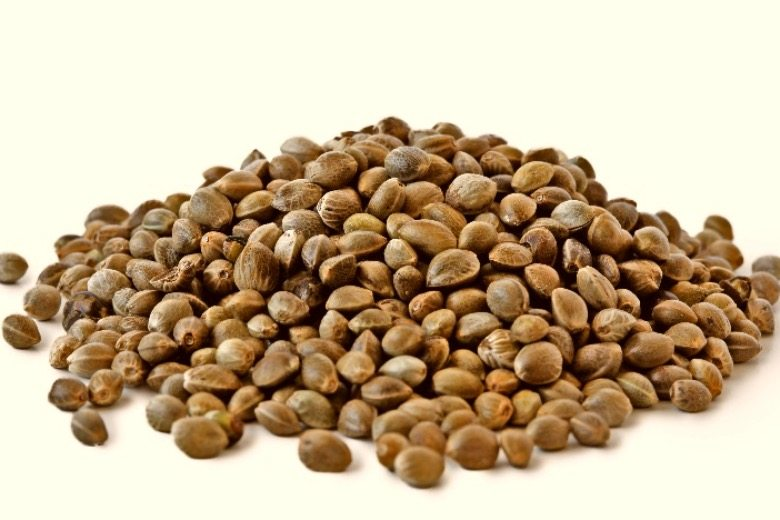 collecte de graines de cannabis