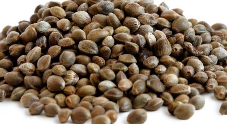 graines de cannabis féminisées indica et sativa