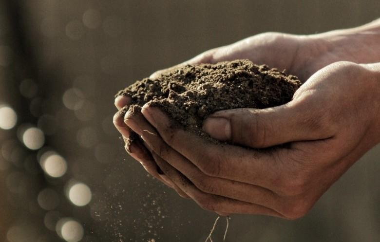 graines de cannabis qui ne germent pas