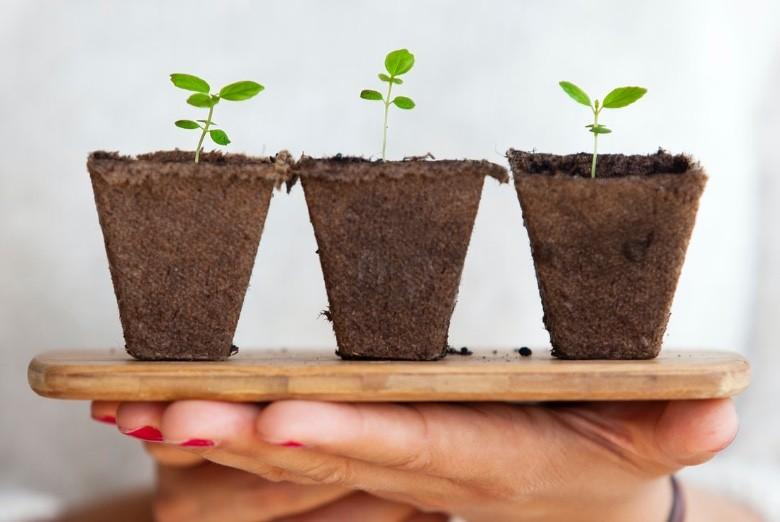 pousser graines de cannabis à l'extérieur ou à l'intérieur