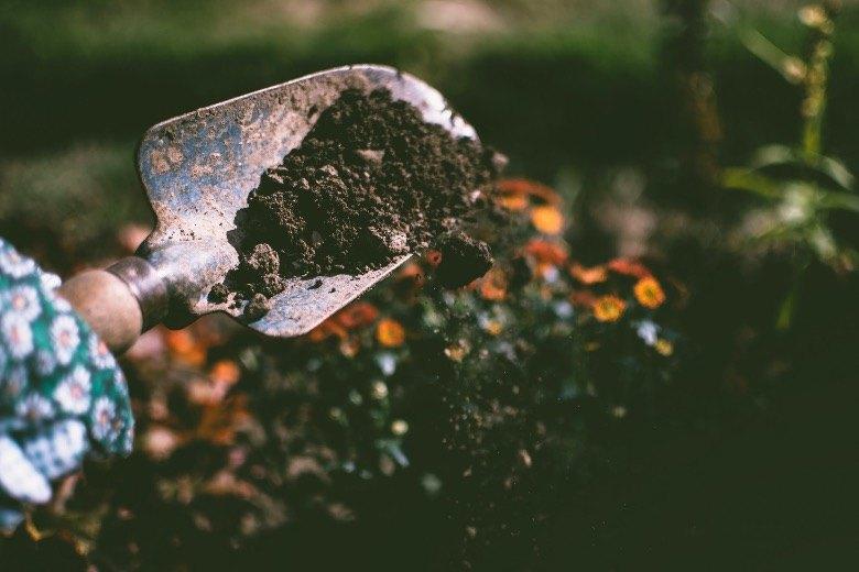 sol de germination graines autofloraison