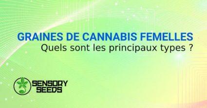 GRAINES DE CANNABIS FEMELLES