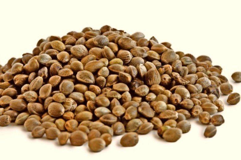 caractéristiques des graines de cannabis féminisées autofloraison