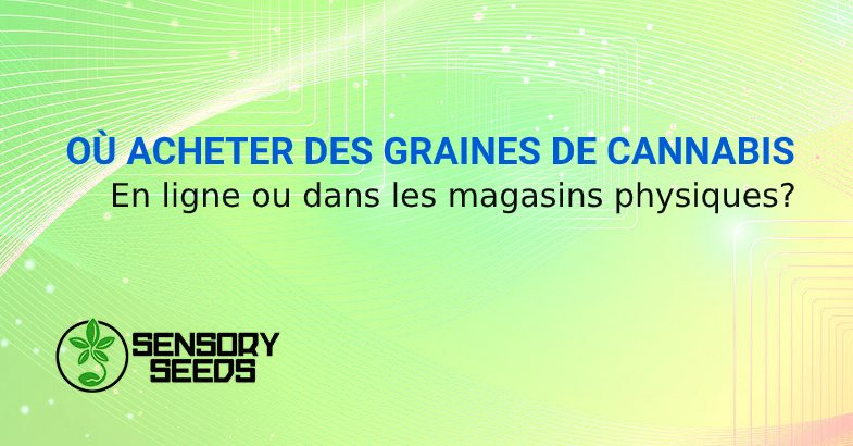OÙ ACHETER DES GRAINES DE CANNABIS
