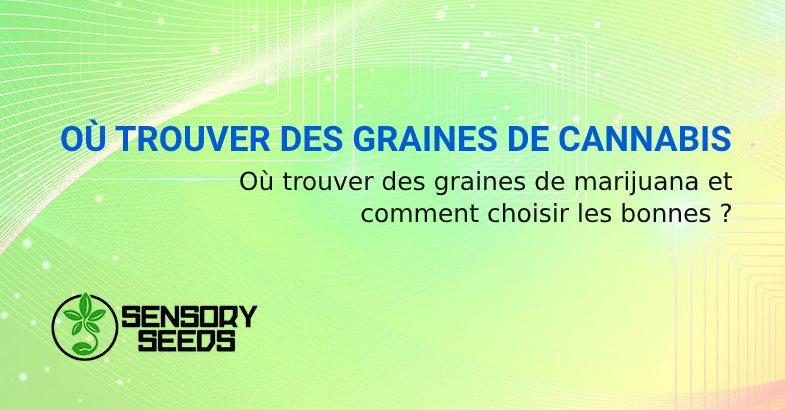 OÙ TROUVER DES GRAINES DE CANNABIS
