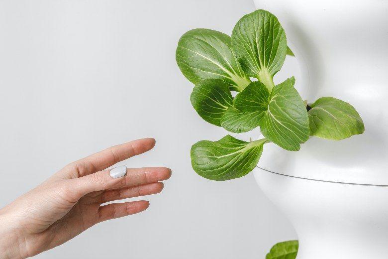 cultiver des graines de canabis avec une serre hydroponique