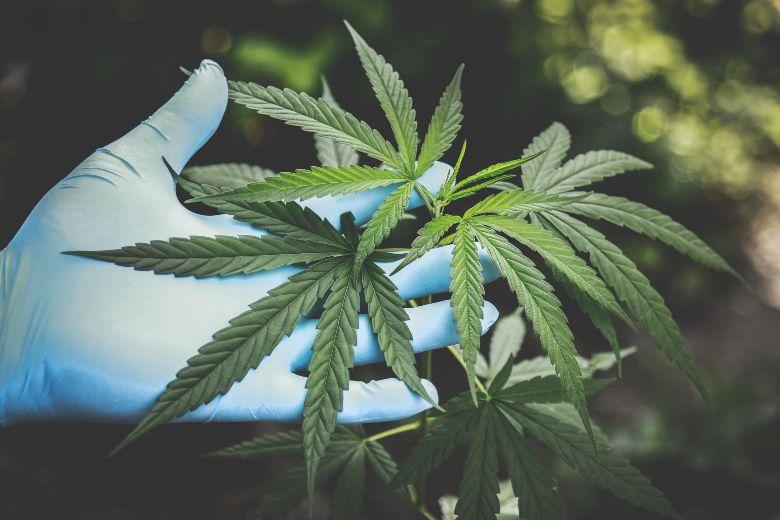 formation à faible stress et graines de cannabis