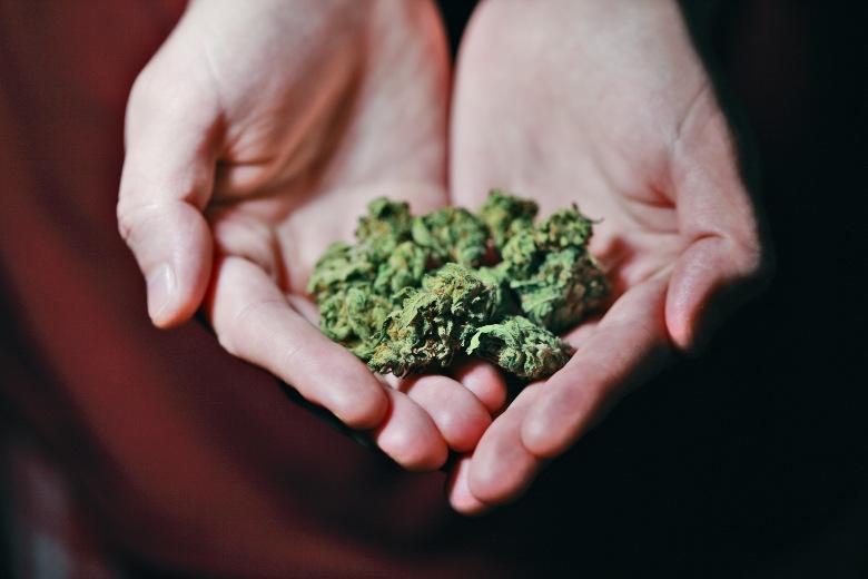 inflorescences et graines de cannabis  haute THC