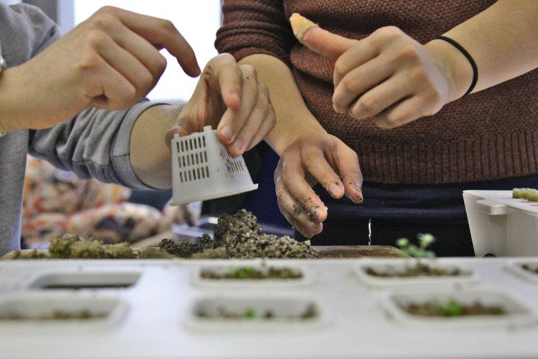 la culture hydroponique et les graines de cannabis