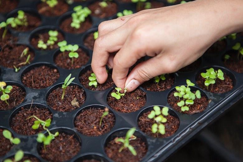le guano de chauve souris pour les plantes et graines de cannabis