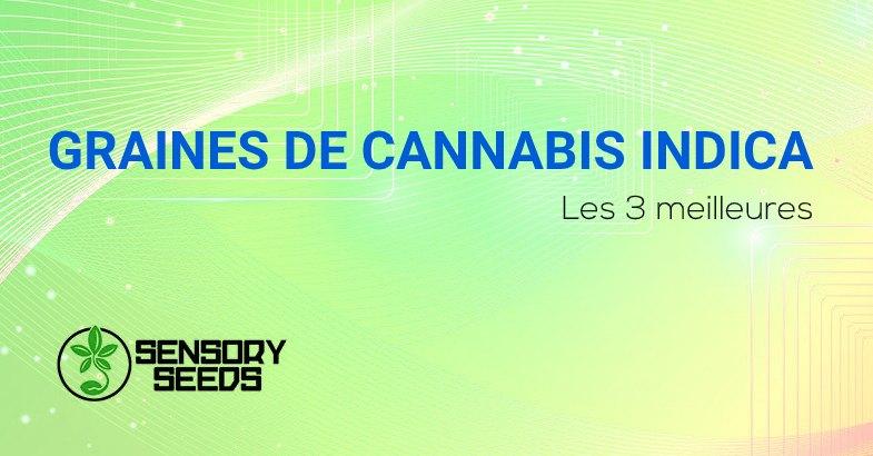 meilleures graines de cannabis Indica