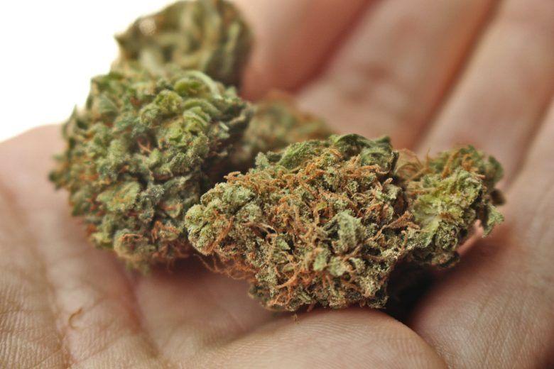 meilleurs types de cannabis et de graines de canabis