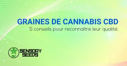 Graines de cannabis CBD