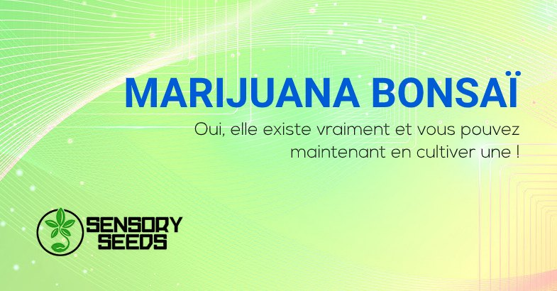 Marijuana Bonsaï