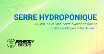 Qu'est-ce qu'une serre hydroponique