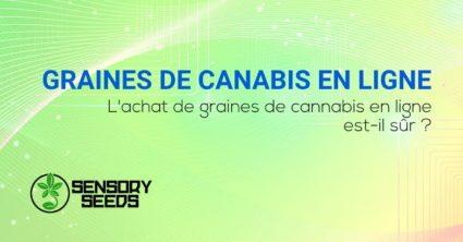 achat de graines de cannabis en ligne