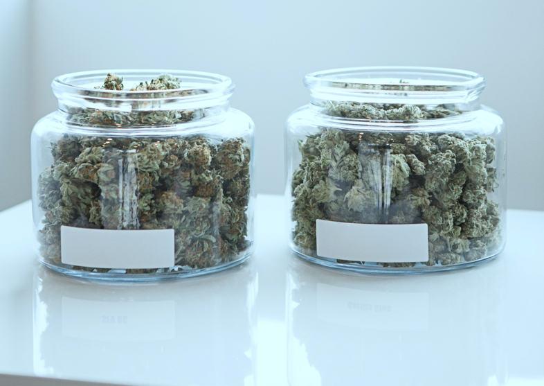 graines de cannabis
